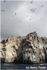 Seabirds soaring over Boatswain Bird Island.