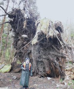 Standing under the massive roots of a fallen tree