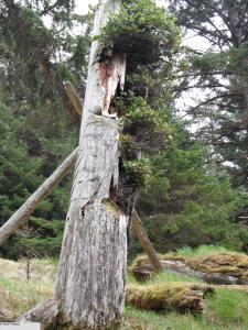 plants growing out of totem pole