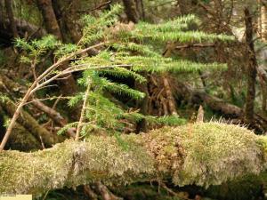 Sapling growing on a fallen log