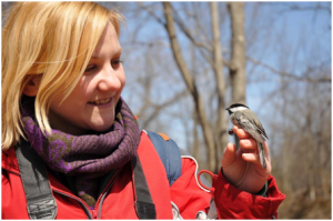 Becky faces off with a black capped chickadee.