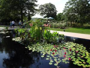 Beautiful water garden at RBG