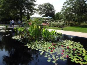 Beautiful water garden at RBG