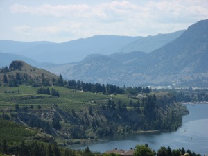 Grapevines as far as the eye can see... Wineries dominate much of the south Okanagan.