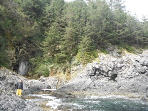 The luscious forests of islands in Haida Gwaii.