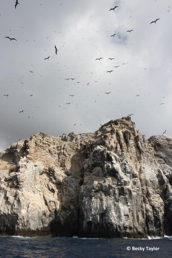 Boatswain Bird Island