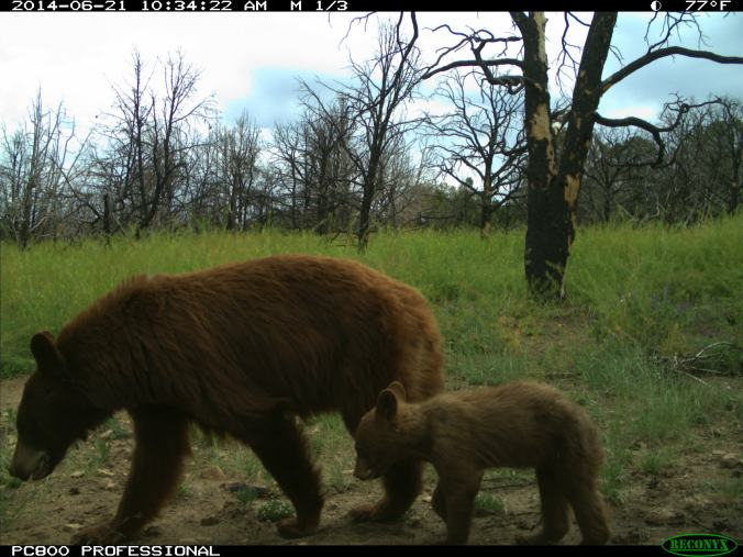 A sow and her cub captured on one of our cameras