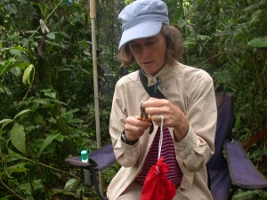 Alice in action, banding birds in Costa Rica