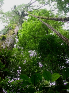 The view up, La Selva Biological Station, Costa Rica