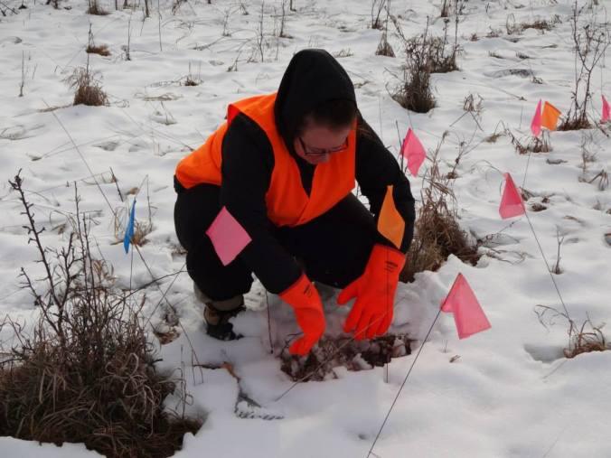 Amanda digging through snow