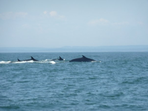A Group Of Whales 3