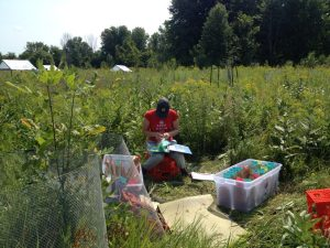 One of my field assistants, Erika, working hard at counting seedlings