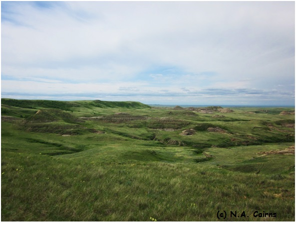 Worth preserving: the seemingly endless sea of grass in Grasslands National Park.