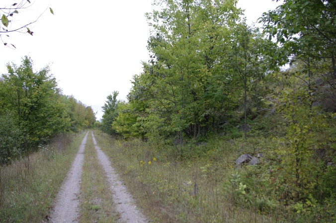 The Cataraqui Trail near QUBS provides ideal foraging habitat for Whip-poor-wills. Photo credit: Philina English