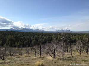 A treatment site at which prescribed fire was used to remove trees in the foothills of the Southern Ruby Mountains.