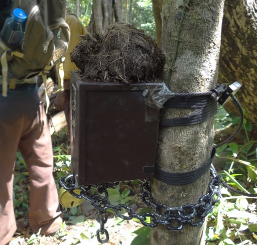 Setting up a camera trap.