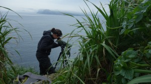 Mikaela in action, monitoring murres on Aiktak.