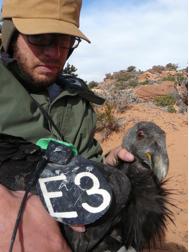Matt Podolsky handles a California condor