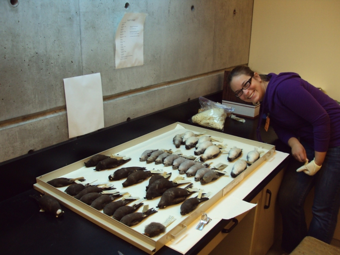 Sarah poses with the drawers of hydrobatin storm-petrels