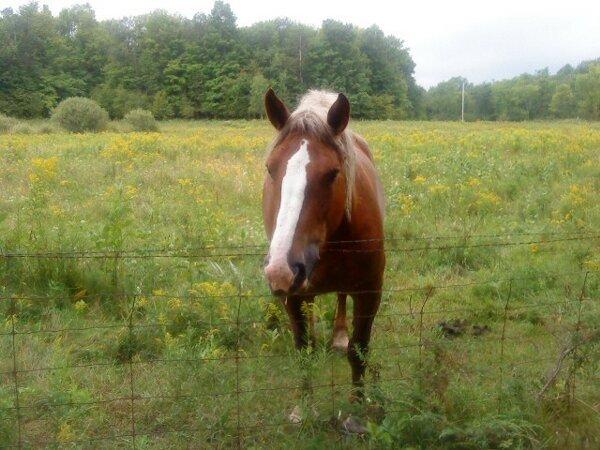 qubs horse 3