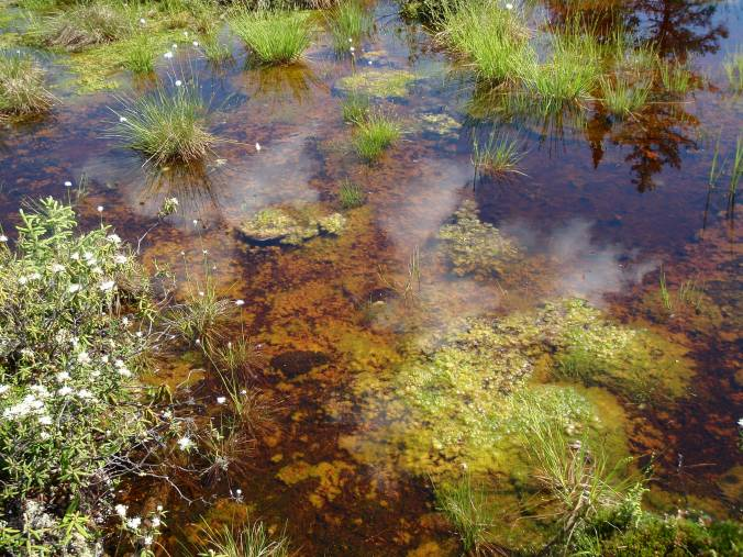 Colourful moss in a particularly wet spot in a bog.
