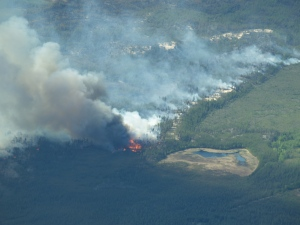 Fire is an important and necessary form of disturbance in the boreal forest.