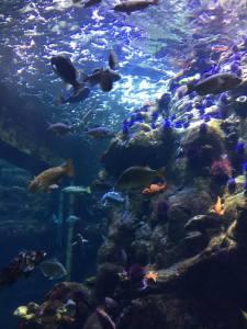 Aquarium at the California Academy of Sciences.