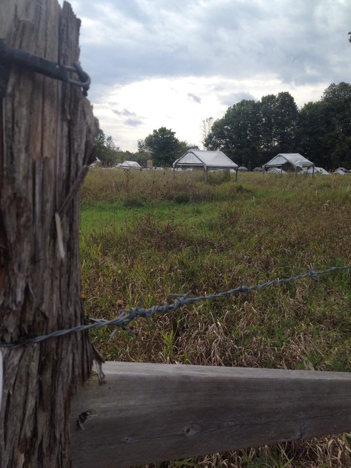 bracken shelters fence shot