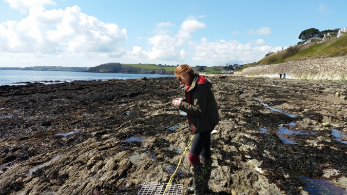 surveying a grid on the rock beds