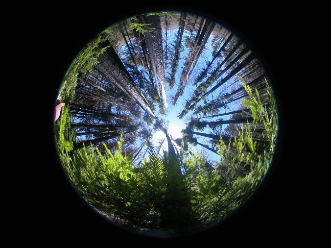 A hemispherical understory photo used to determine the amount of light reaching the forest floor.