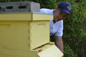 Adam counting bees leaving the hive.