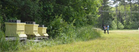 3 bee hives