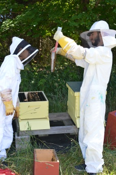 James and Joanna inspecting a frame of bees as they install the bees into their new home.