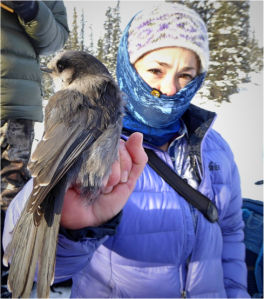 Emily bundled up with a Gray Jay in her hand