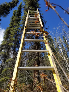 large ladder leaning against the tree