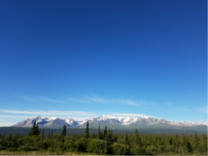 tree line with mountains in the background