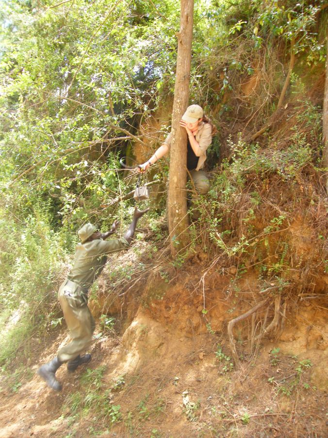 Positioning camera traps to catch elephant images, while keeping them out the way of curious hyenas!