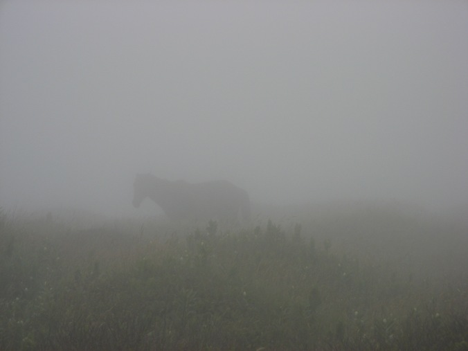 A typical view of one of Sable Island's famous wild horses..shrouded by fog.